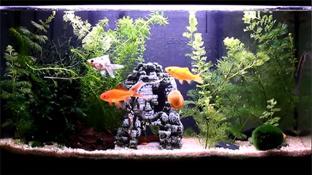 Aquarium screenshot2
