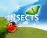 Nature of Insects